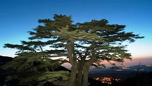 República del Líbano